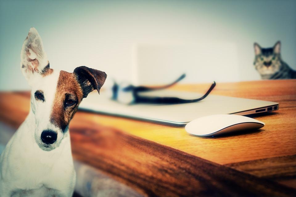 Aller au travail avec son animal de compagnie, pourquoi pas ?